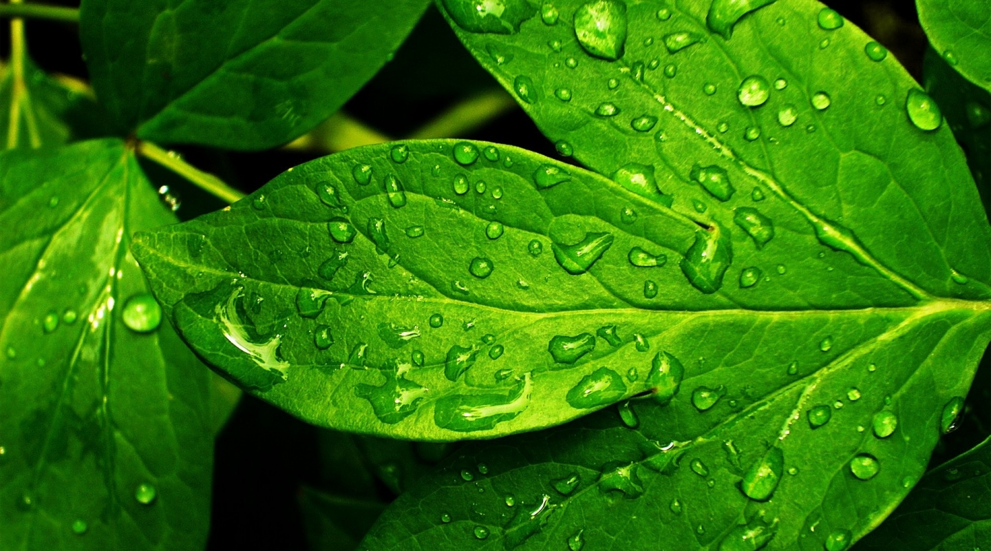 Raindrops on Beautiful Leaves!