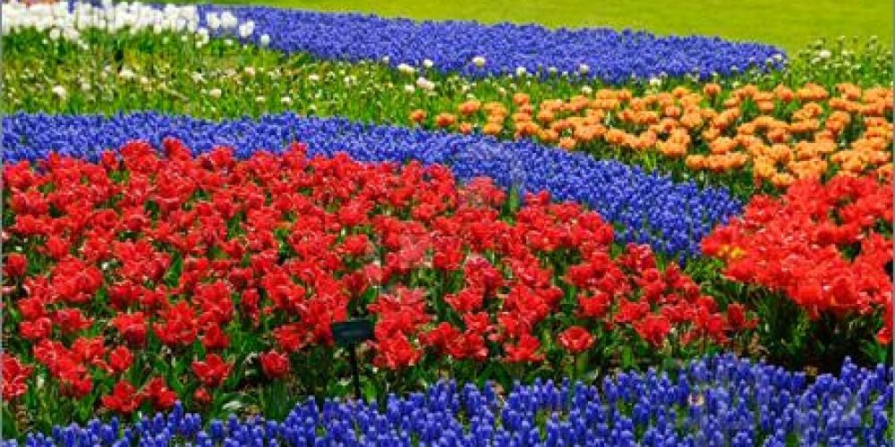 Flower-Garden-714557